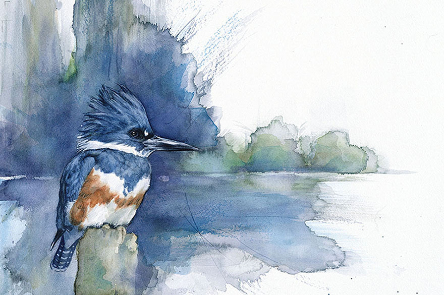 biologist-waterpainting-birds-anne-balogh-2
