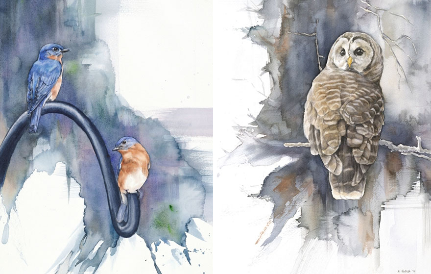 biologist-waterpainting-birds-anne-balogh-8