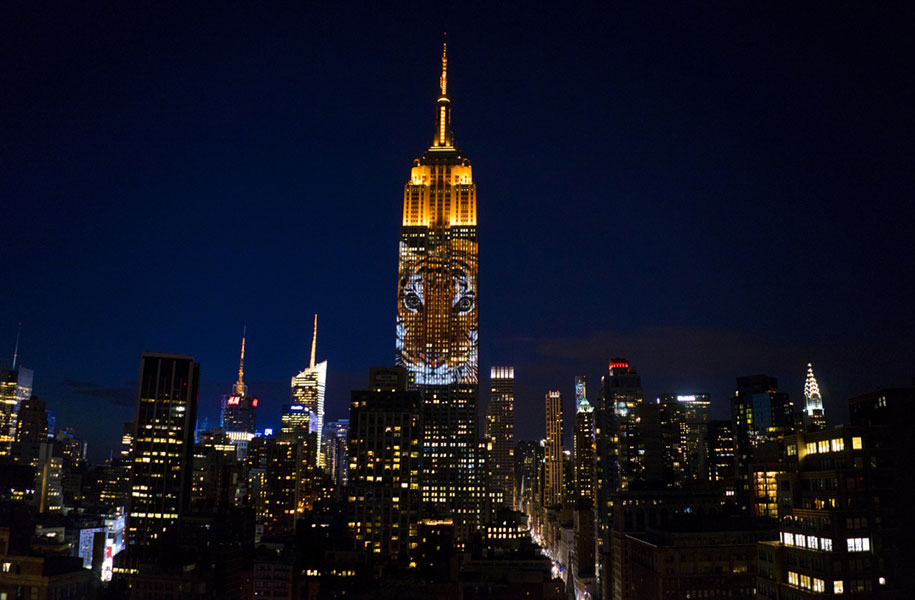 cecil-lion-endangered-species-projecting-change-empire-state-building-obscura-digital-15