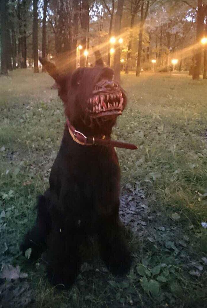 scary-dog-muzzle-werewolf-zveryatam-russia-4