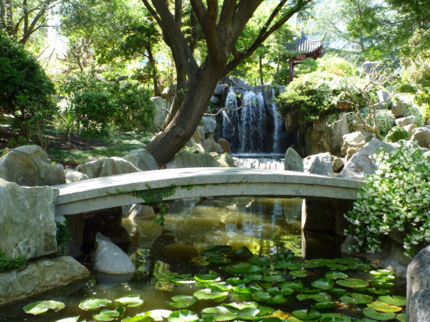 Shots from Sydney\'s Chinese Garden of Friendship Reveal a Divine ...