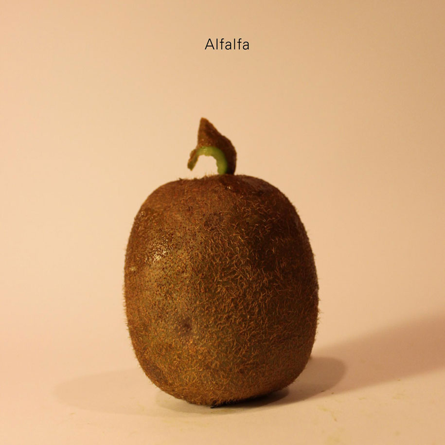 celebrities-politicians-carved-kiwi-fruit-anthony-chidiac-3