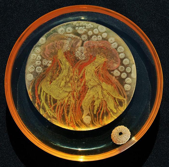 agar-jelly-petri-dish-microbe-bacteria-art-van-gogh-starry-night-11