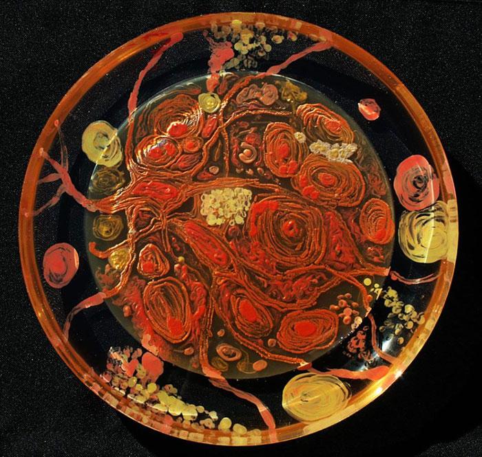 agar-jelly-petri-dish-microbe-bacteria-art-van-gogh-starry-night-3