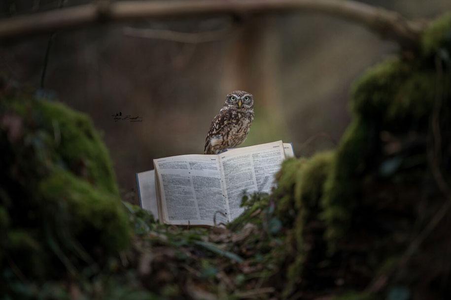 animal-photo-owl-hide-rain-mushroom-podli-tanja-brandt-1