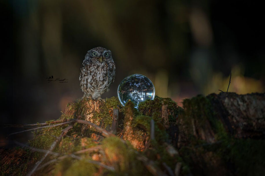A Little Owl S Tiny Adventures In The Woods By Tanja Brandt