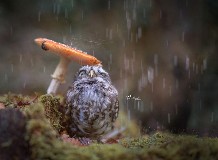 animal-photo-owl-hide-rain-mushroom-podli-tanja-brandt-13