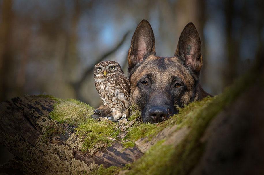 animal-photo-owl-hide-rain-mushroom-podli-tanja-brandt-14