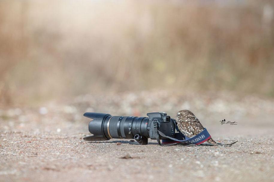 animal-photo-owl-hide-rain-mushroom-podli-tanja-brandt-2