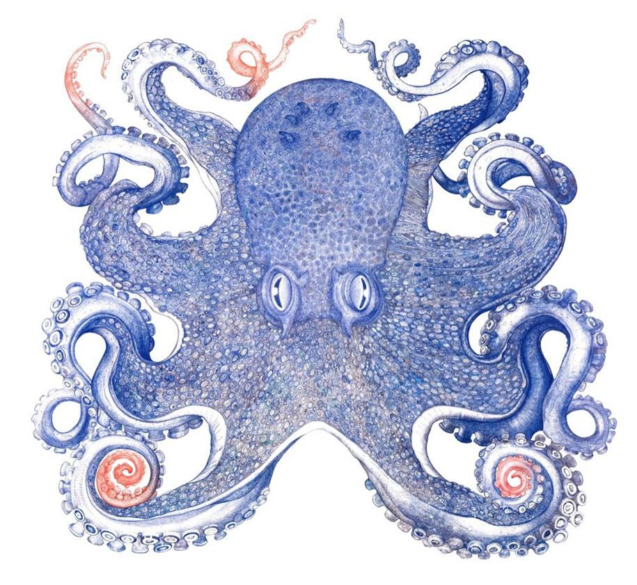 ballpoint-pen-drawing-deep-blue-octopus-raymond-cicin-2