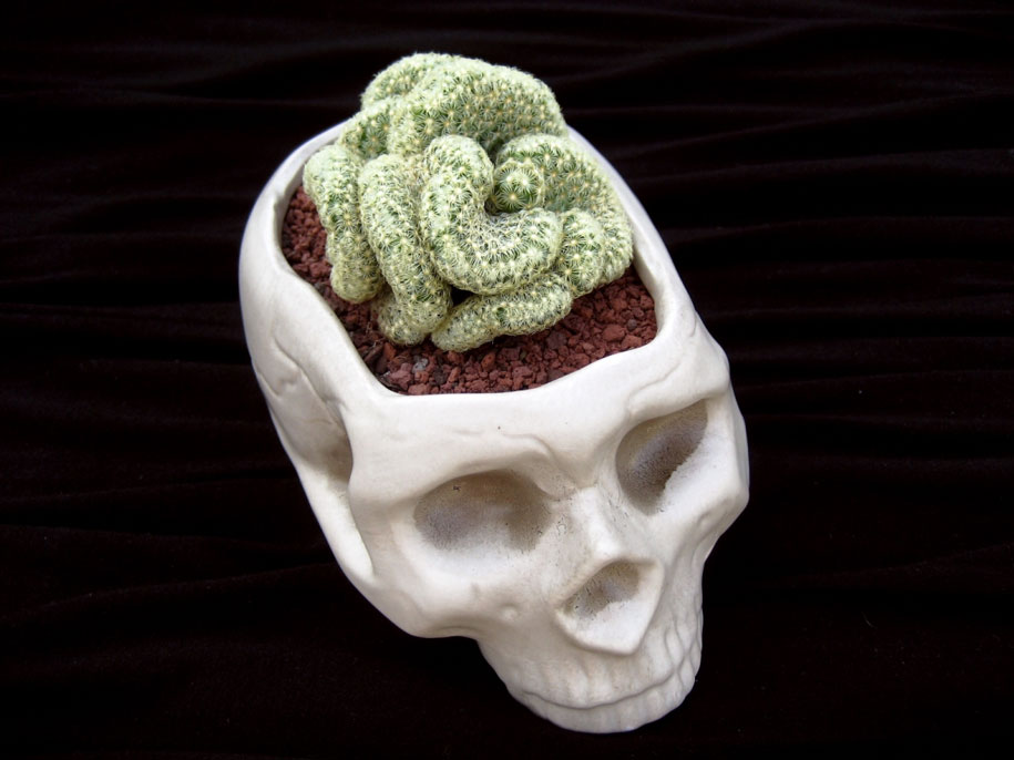 great-funny-crazy-modern-plant-pot-planter-ideas-14