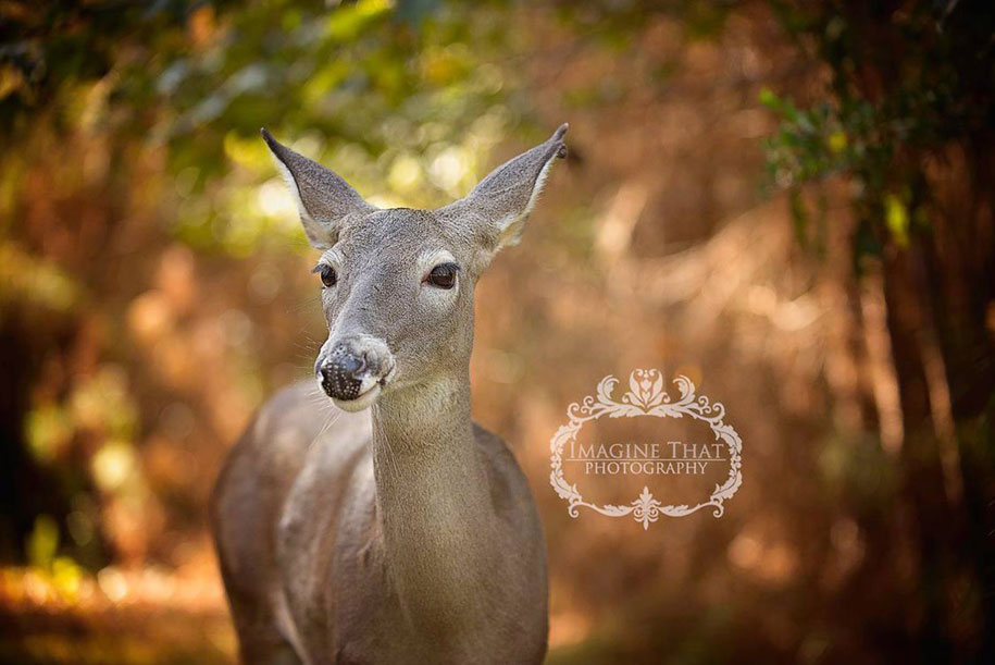 maggie-deer-newborn-photoshoot-photobomb-megan-rion-imagine-that-6