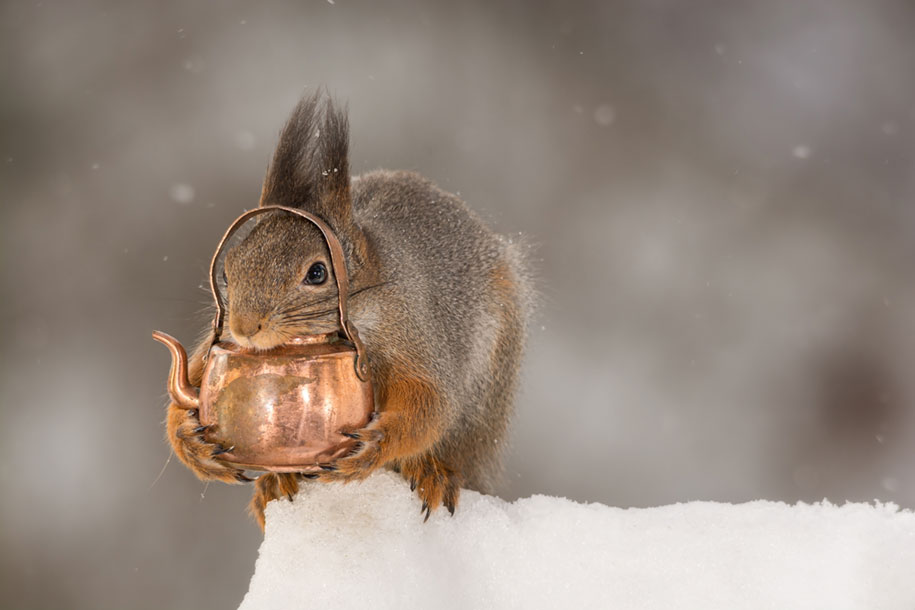 nature-animal-photography-backyard-squirrels-geert-weggen-11