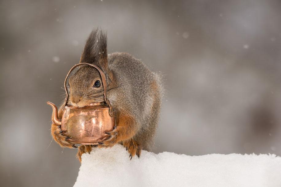 nature-animal-photography-backyard-squirrels-geert-weggen-11