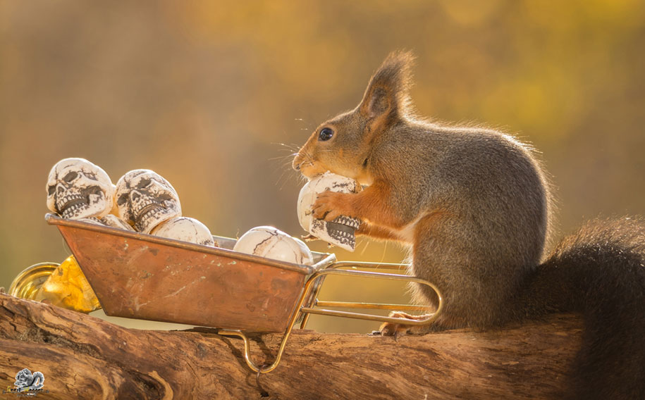 nature-animal-photography-backyard-squirrels-geert-weggen-13