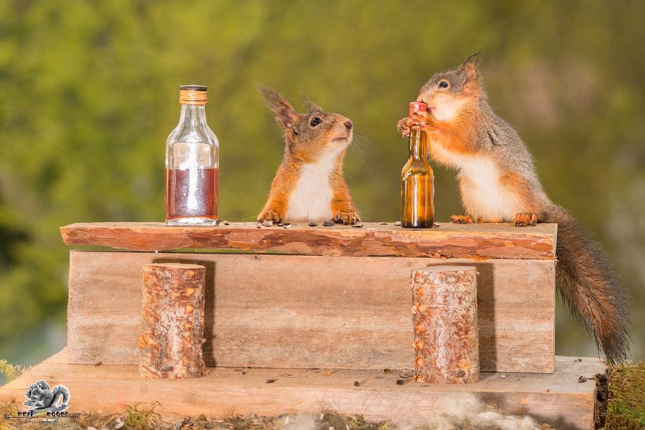 nature-animal-photography-backyard-squirrels-geert-weggen-15
