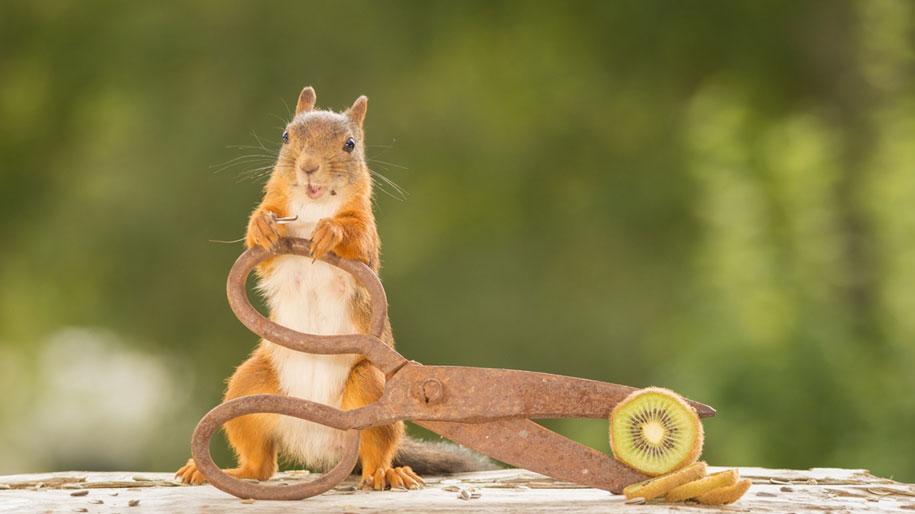 nature-animal-photography-backyard-squirrels-geert-weggen-3