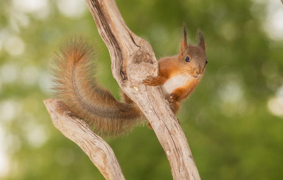 nature-animal-photography-backyard-squirrels-geert-weggen-4