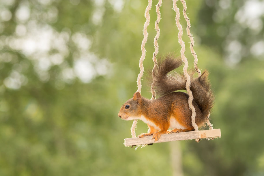 nature-animal-photography-backyard-squirrels-geert-weggen-6