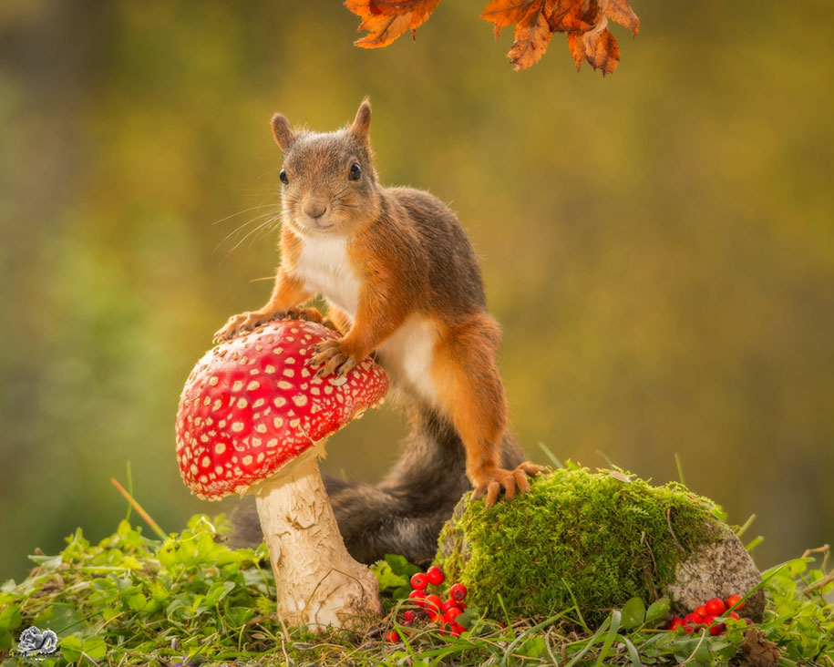 squirrels nature animal geert weggen backyard nuts fall living taking photographer makes