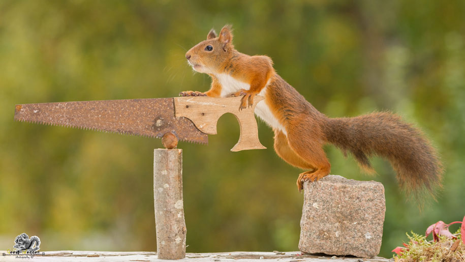 nature-animal-photography-backyard-squirrels-geert-weggen-9