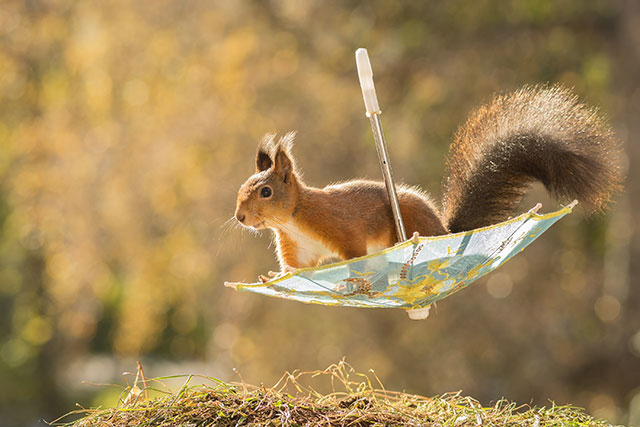 1d32cc14eb37e Photographer Almost Makes A Living Taking Photos Of Squirrels In His ...
