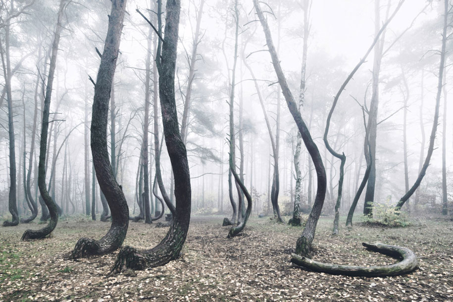 nature-photography-twisted-trees-crooked-forest-kilian-schonberger-6