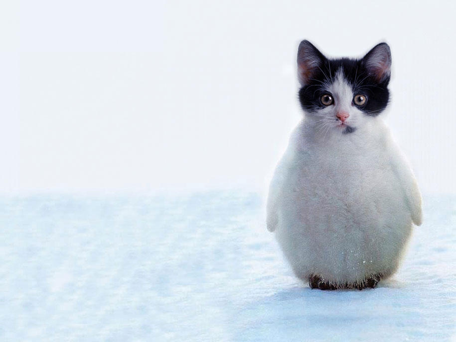 15 hybrid animals born in the land of photoshop
