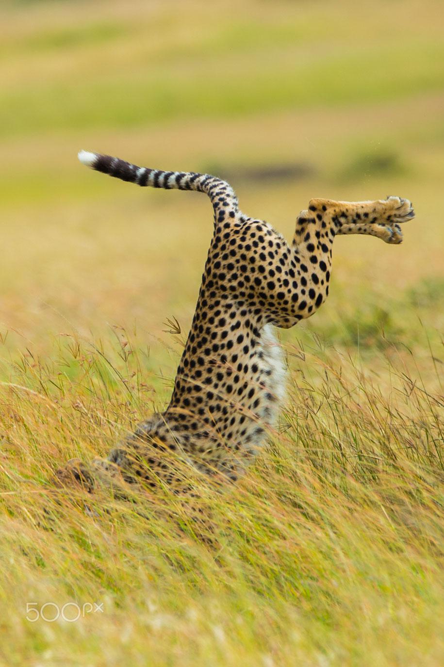 funny-animal-pictures-comedy-wildlife-photography-awards-paul-joynson-hicks-1