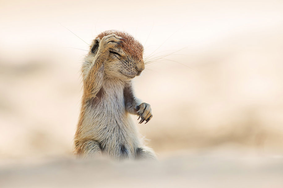 13 Hilarious Winners Of The Comedy Wildlife Photography