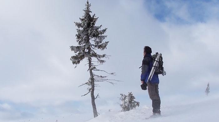 worlds-oldest-tree-9500-year-old-tjikko-sweden-3