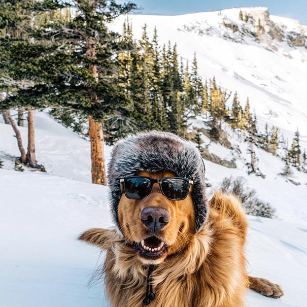travelling-dog-aspen-hunter-lawrence-1