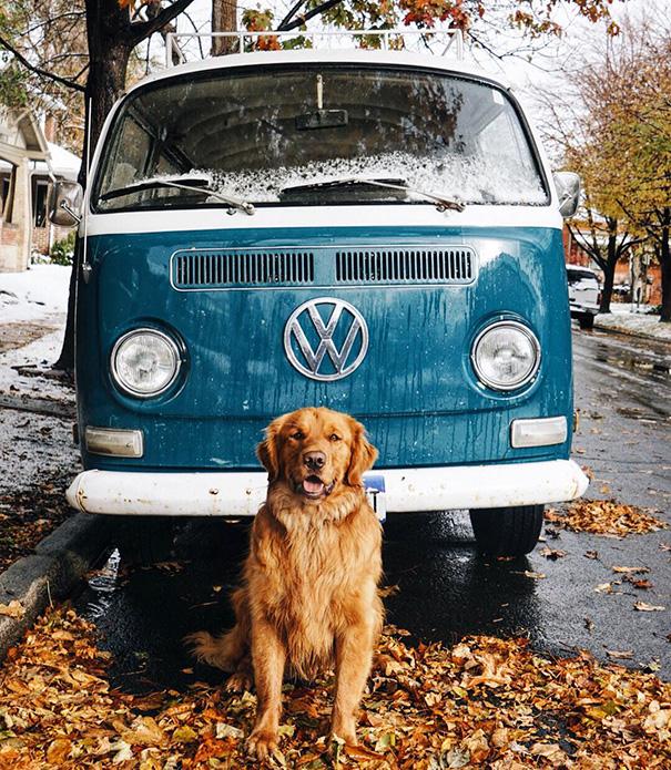 travelling-dog-aspen-hunter-lawrence-12