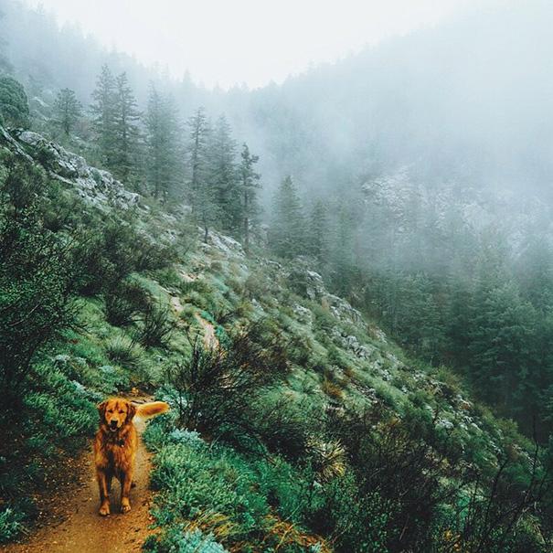 travelling-dog-aspen-hunter-lawrence-16