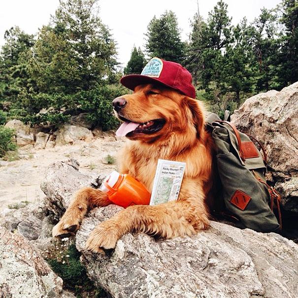 travelling-dog-aspen-hunter-lawrence-17
