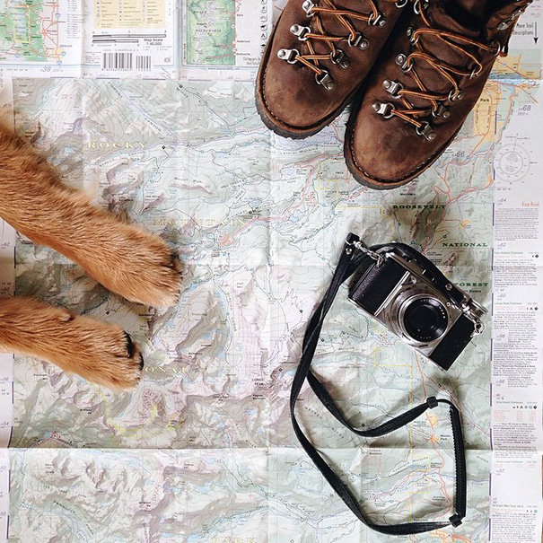 travelling-dog-aspen-hunter-lawrence-19