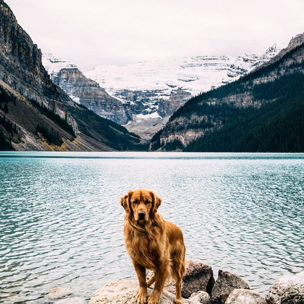 travelling-dog-aspen-hunter-lawrence-2