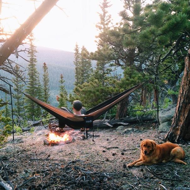 travelling-dog-aspen-hunter-lawrence-4