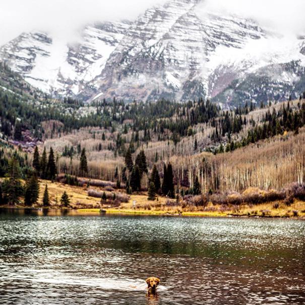 travelling-dog-aspen-hunter-lawrence-6