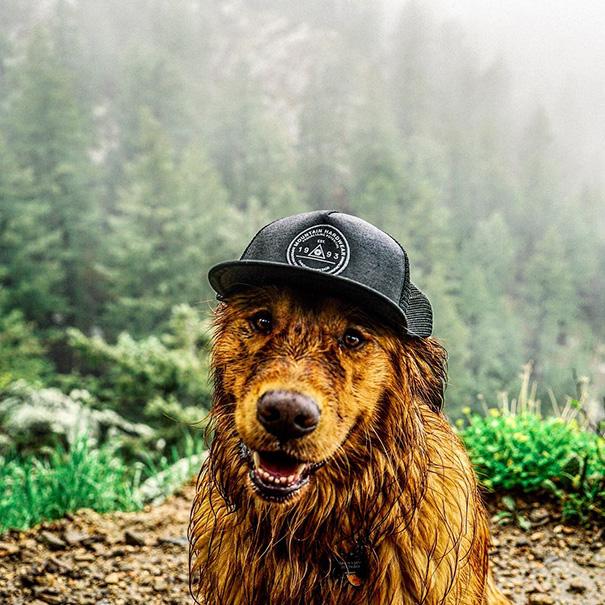 travelling-dog-aspen-hunter-lawrence-7