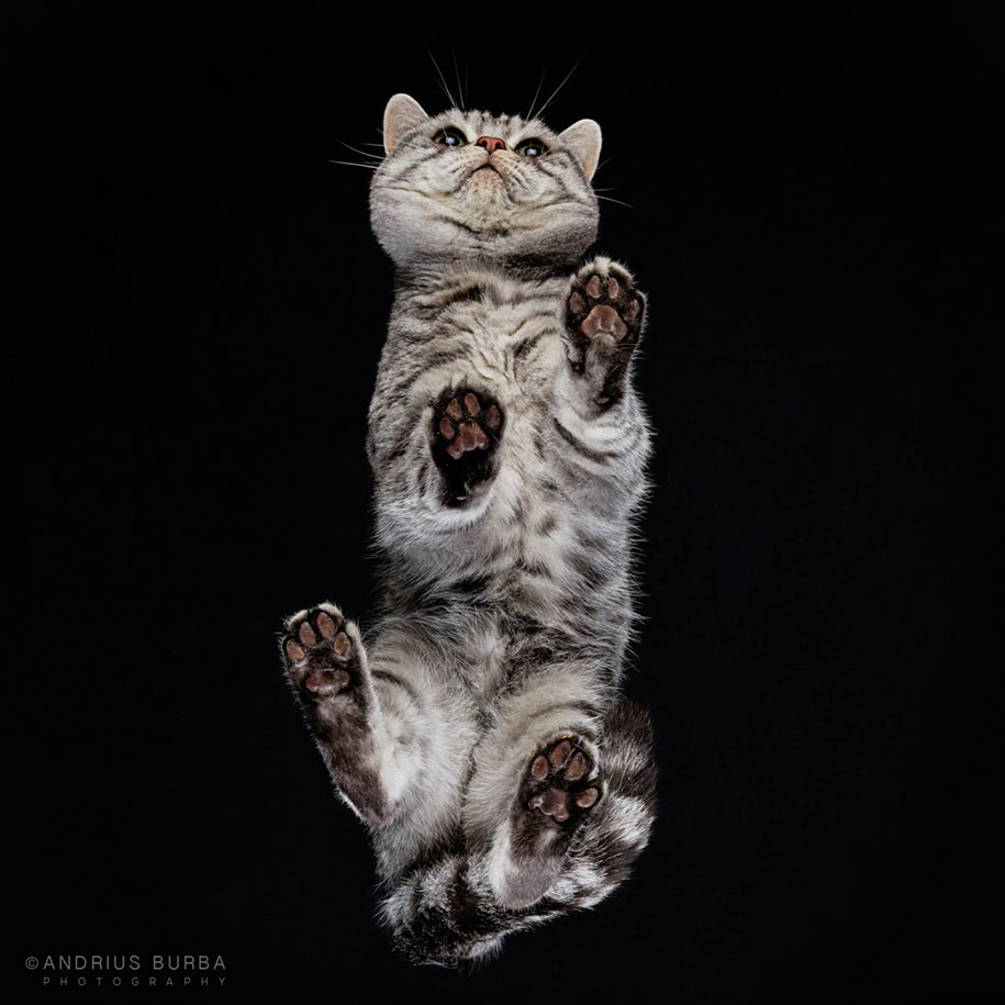 underneath-cat-photographs-undercats-andrius-burba-25