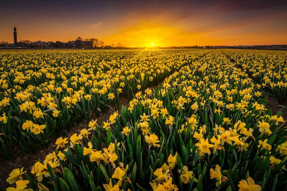 -amazing-netherland-photgraphy-albert-dros-13