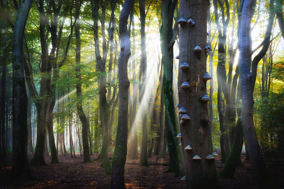 -amazing-netherland-photgraphy-albert-dros-17