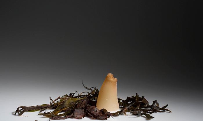biodegradable-algae-plastic-replacement--ari-jonsson-2