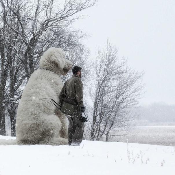 dog-giant-roams-streets-photoshop-juji-christopher-cline-15