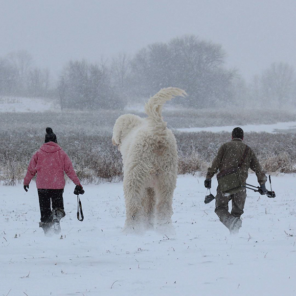 dog-giant-roams-streets-photoshop-juji-christopher-cline-16