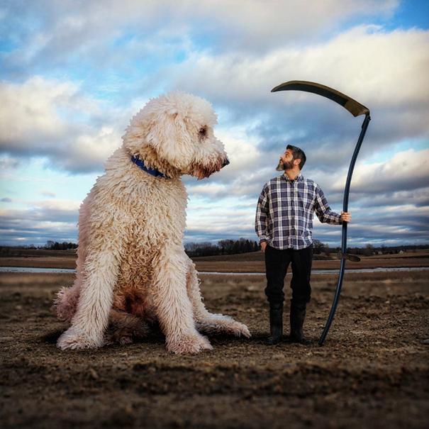dog-giant-roams-streets-photoshop-juji-christopher-cline-17
