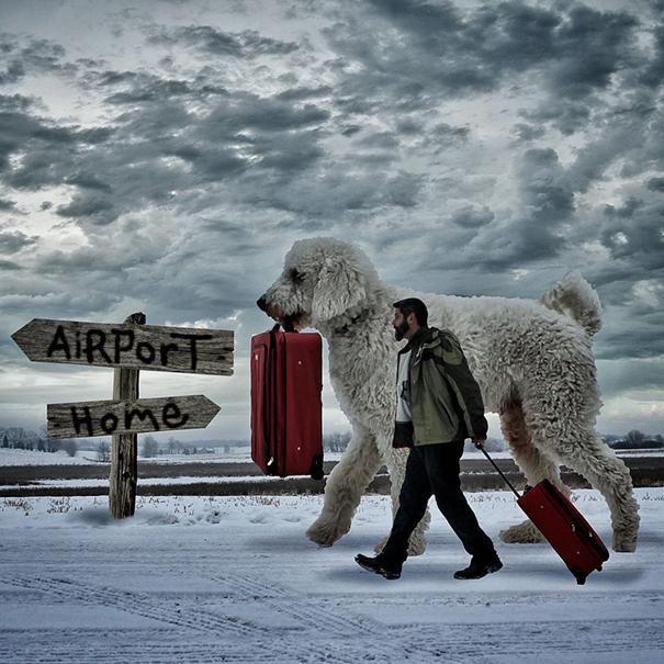 dog-giant-roams-streets-photoshop-juji-christopher-cline-19
