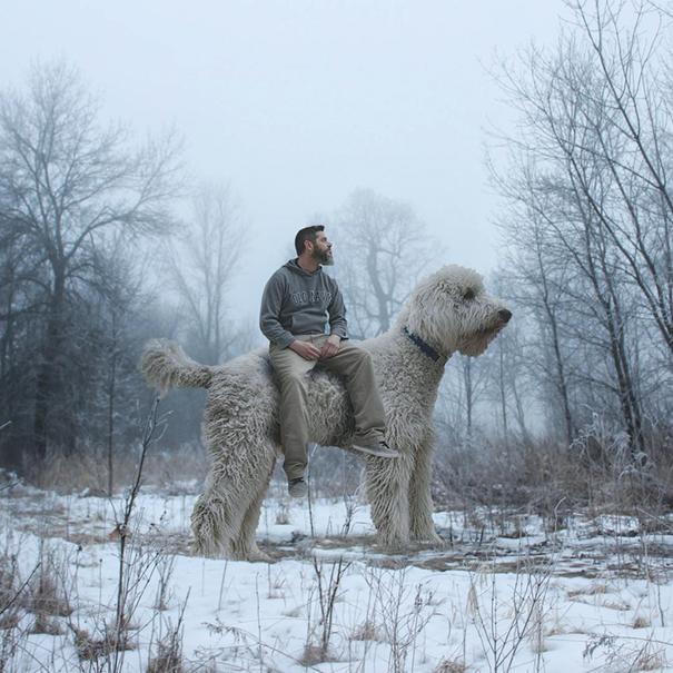 dog-giant-roams-streets-photoshop-juji-christopher-cline-28