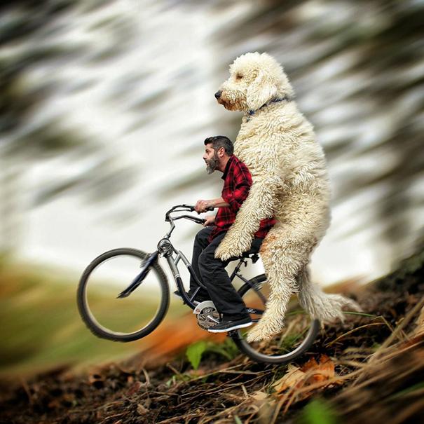dog-giant-roams-streets-photoshop-juji-christopher-cline-7